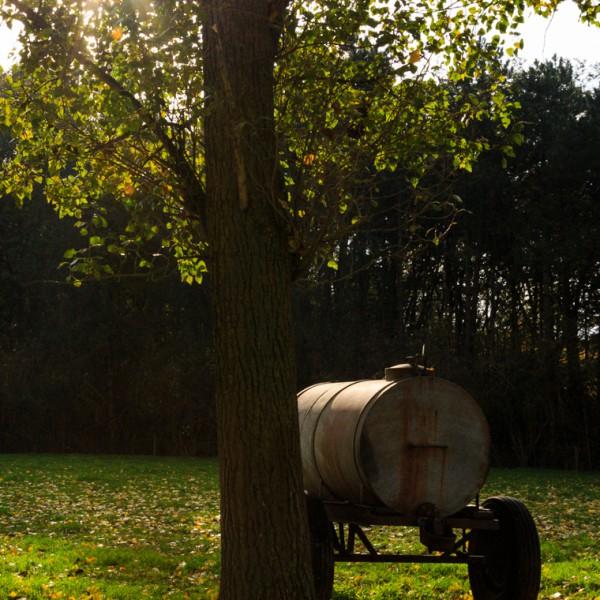 Foto's van paddenstoelen in de Palingbeek te Ieper | Krist Hooghe Fotografie