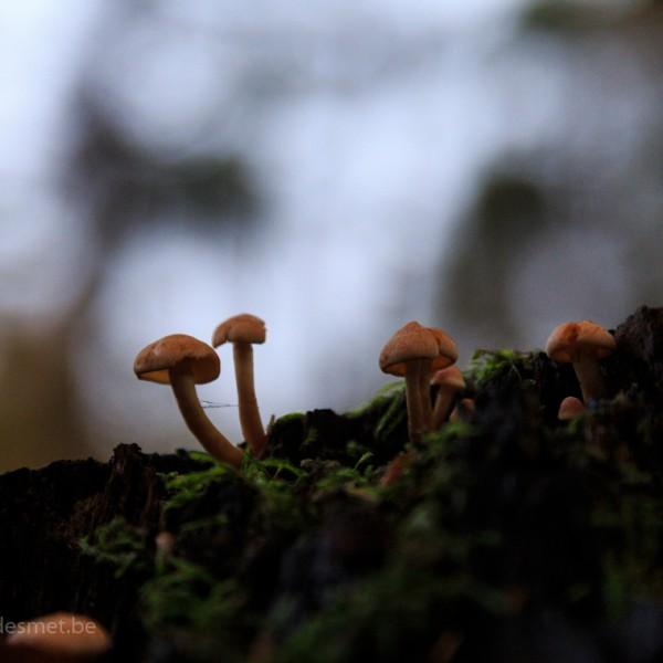 Bezoek aan het Polygoonbos te Zonnebeke - herfst - Krist Hooghe Fotografie Menen